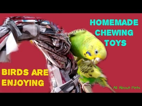 Homemade Chewing Toy For Budgies/ Lovebirds || How To Make Chewing Toys for Small Parrots at Home?