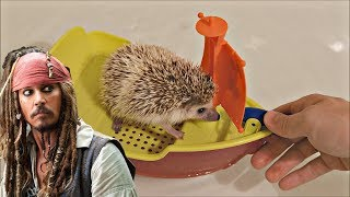 Hedgehog wants to be a Pirate