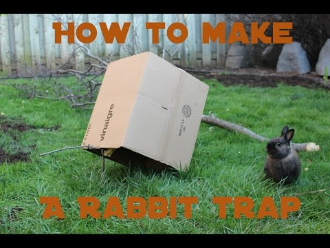 How to Make a Humane Rabbit Trap