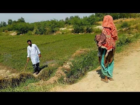 Sohna Pind Gujjran Da Village Life in Pakistan Episode 12