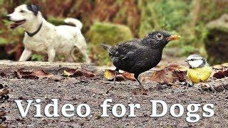 Videos for Dogs - Autumn Birds