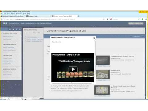 Organizing Your Content in Blackboard Learn