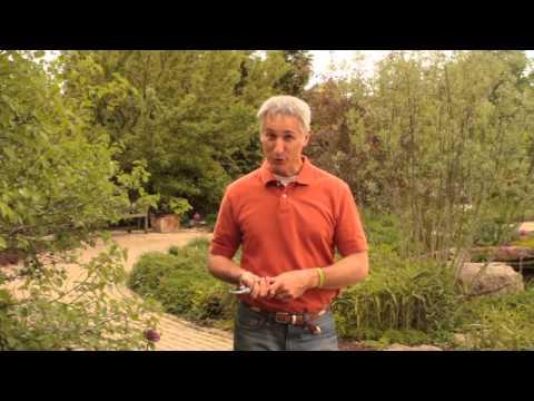 Pourquoi et quand élaguer vos plantes