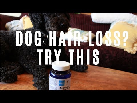 Home Remedy For Dog Hair Loss