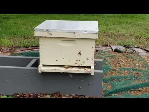 Bee Swarm Update
