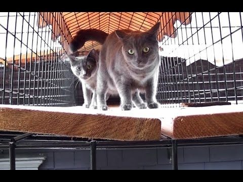 Outdoor Living For Indoor Cats