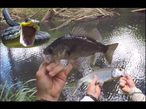 Australian Bass and Tarpon fishing - And SNAKE ATTACK!