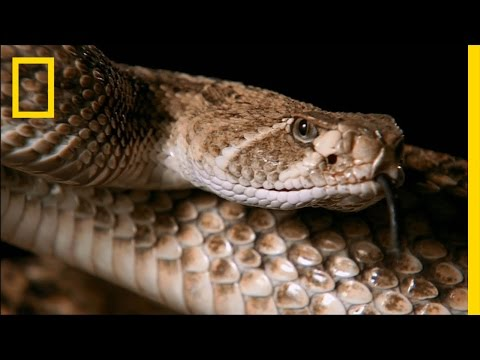 Snake Bite | Do or Die
