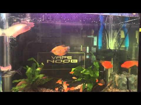 Malaysia Aquarium Fish Indutries Sell Fish Online Malaysia