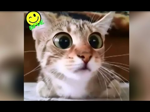 Funny Cat Watches Scary Horror Movie !! - Very Funny Video - Scared Cat - Best Scare Ever