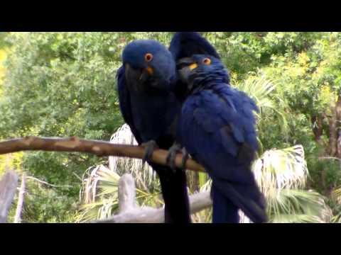 Love Parrots Got Caught