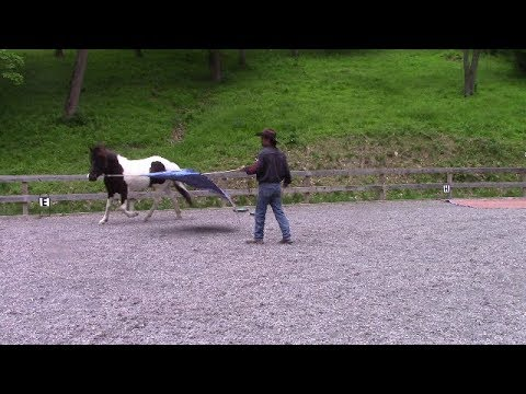 Building Confidence in the spooky horse, Mike Hughes, Auburn California