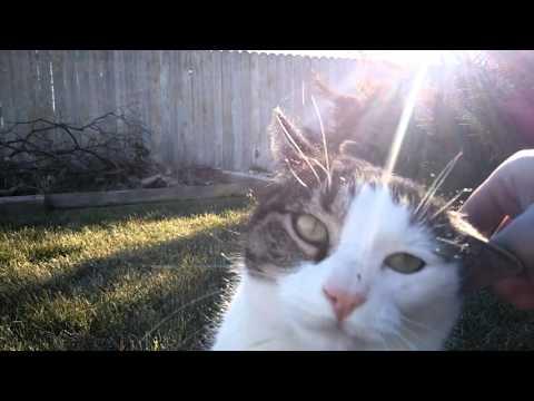 Friendly Stray Cat in Backyard