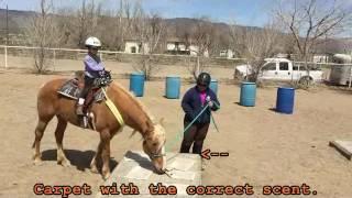 Equine Scent Detection Part 1