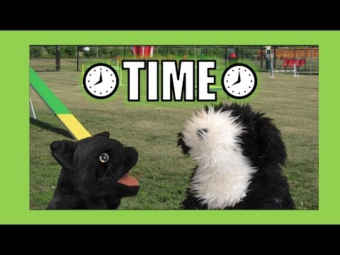 Time:  George the Self Esteem Cat