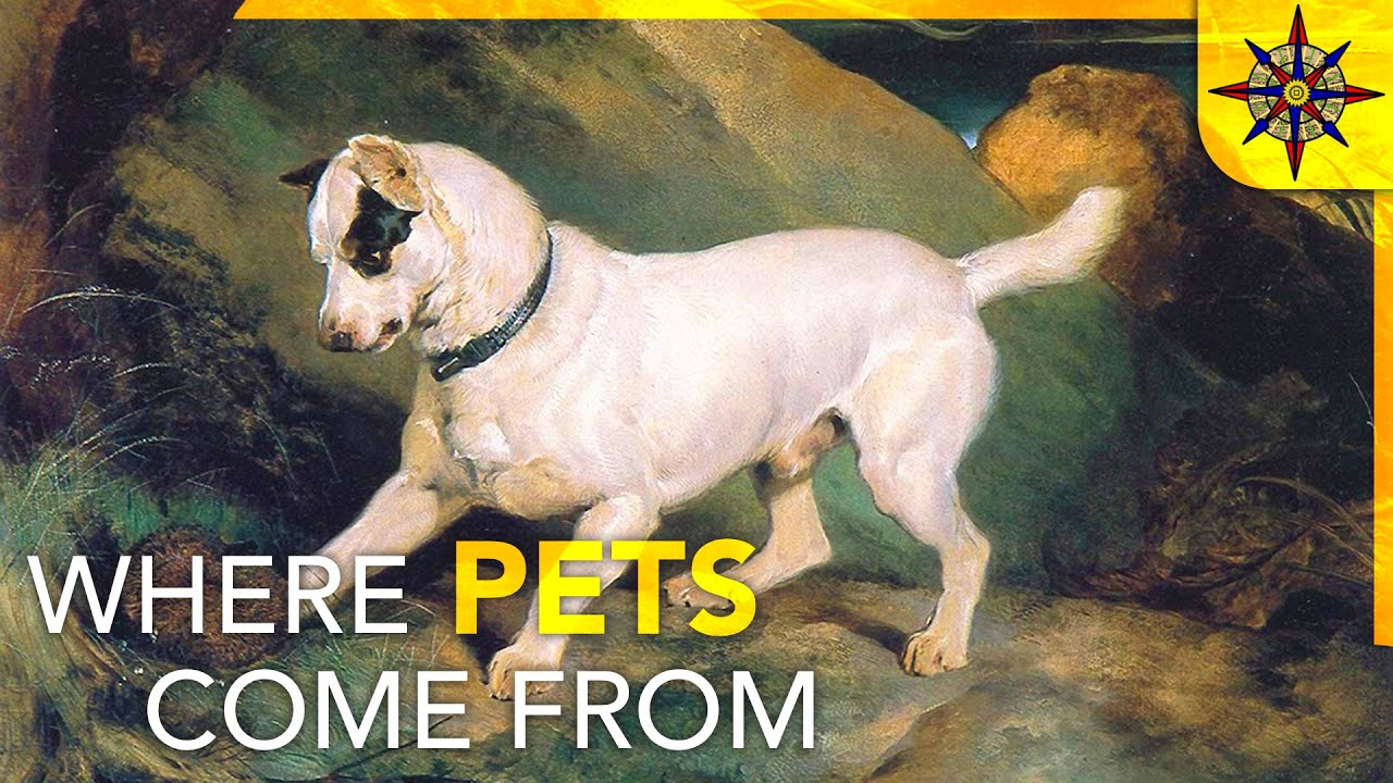 The Geography of Pets