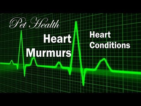 Pet Heart Murmur