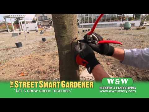 Healing a Tree Wound - The Street Smart Gardener