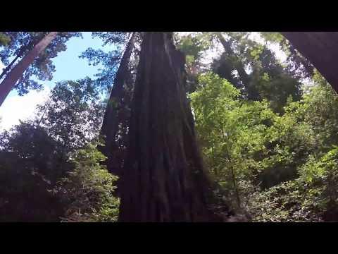 Humboldt Redwood State Park, CA
