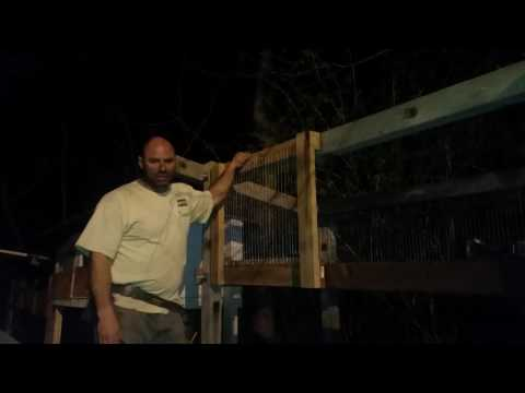 Rabbit Hutch self latching door 2 of 2