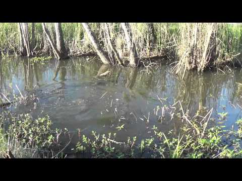 Mudbuggin 2014. Louisiana. The Crawfish Diaries. Episode 7. It all comes together,