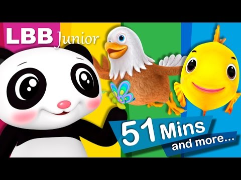 Nature Song | And Lots More Original Songs | From LBB Junior!