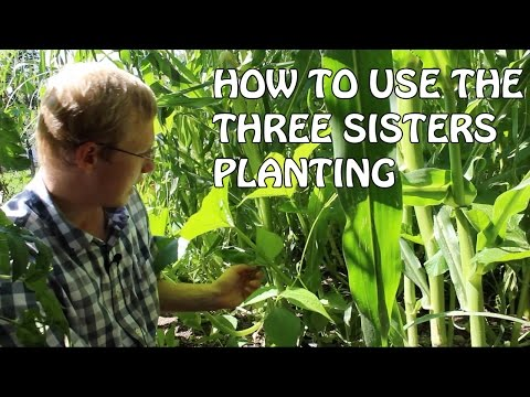 How To Use The Three Sister Planting Method