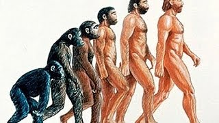 Evolution   The Evolution of humans documentary 2014