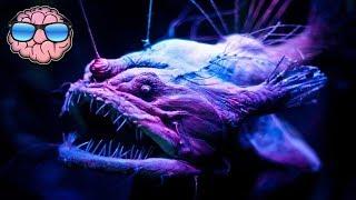 Top 10 CREEPY Deep Sea Creatures You Didn