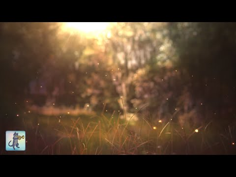 Download Beautiful Piano Music ~ Relaxing Music For Sleep