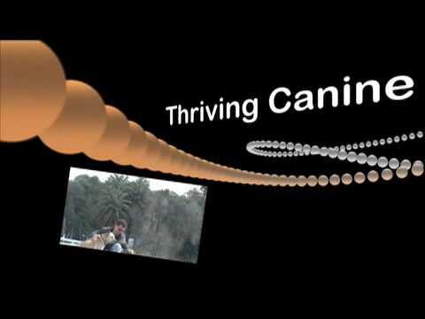 Dog Training: Dog Aggression Rehabilitation - Thriving Canine
