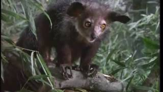 Zoboomafoo: Dinosaurs (HQ) Part 2/2