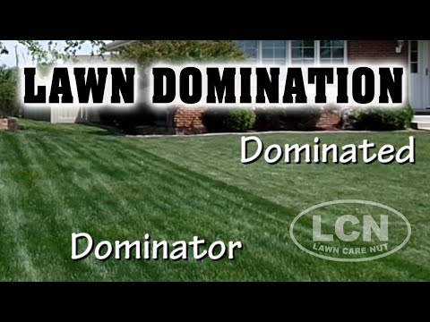 How To Dominate Your Neighbor's Lawn