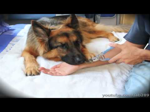 How To Clicker Train Your Dog To Enjoy Nail Clipping!