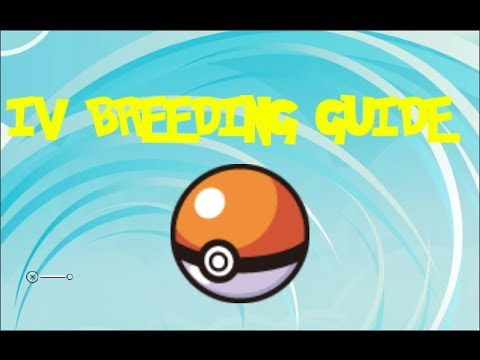 IV Breeding Guide Pokemon X and Y Version (How to Get a Perfect Pokemon)