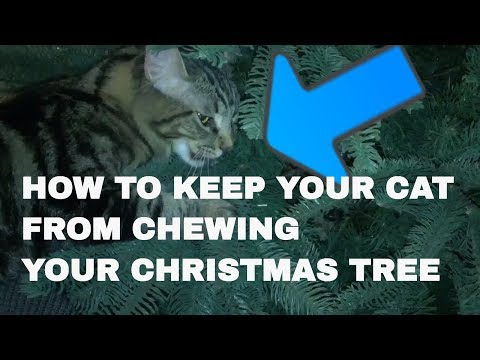 HOW TO KEEP YOUR CAT FROM CHEWING YOUR CHRISTMAS TREE