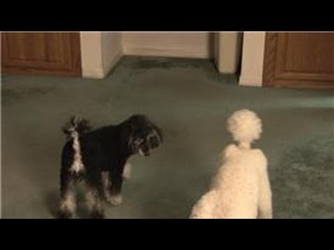 Carpet Cleaning : How to Remove a Set-In Dog Smell from a Carpet at Home