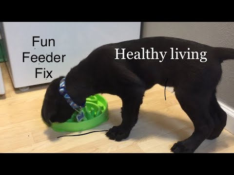 (Fun Feeder Review) How to prevent dog from throwing up after eating/drinking