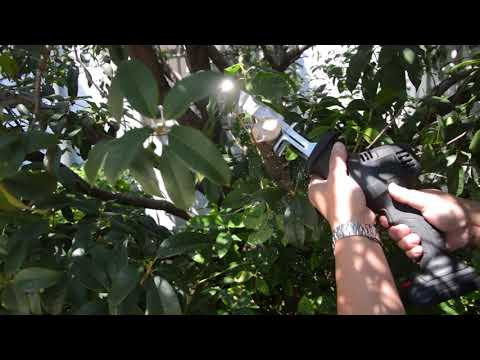 KD-01 Cut the branches