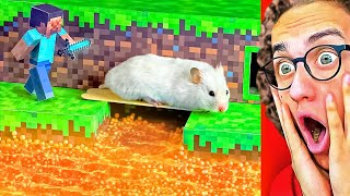Hamster VS. Extreme MINECRAFT Maze in Real Life!