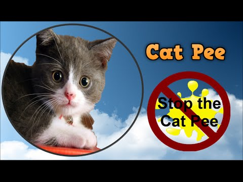 Cat Pee, How To Get Cat Urine Smell Out Of Carpet, Cat Urine Remover, Neutralize Cat Urine