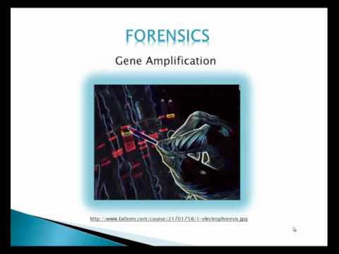 Appication Of Gene Cloning.mp4