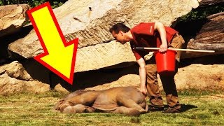 Quick-Thinking Zookeeper Revives A Baby Elephant After His Mother Couldn't Wake Him Up