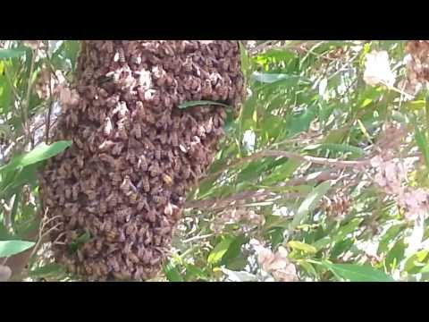 How to get rid of bees in Santa Ana? - Call Bee Busters - 949-497-6264