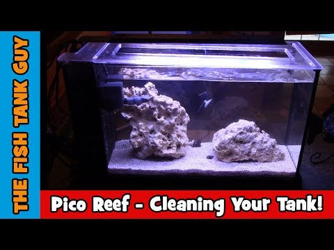 Pico Reef - Fluval EVO 5g - Cleaning Your Tank
