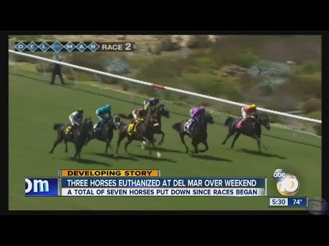 Seven horses euthanized in Del Mar's first eight days of races