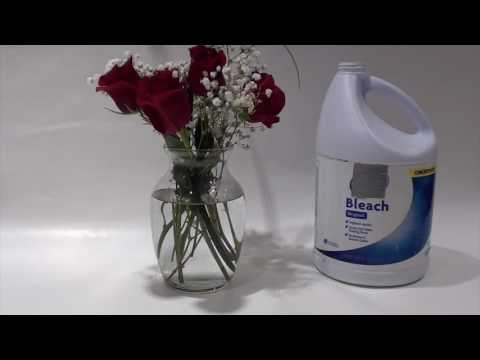 How to Preserve Cut Flowers Longer