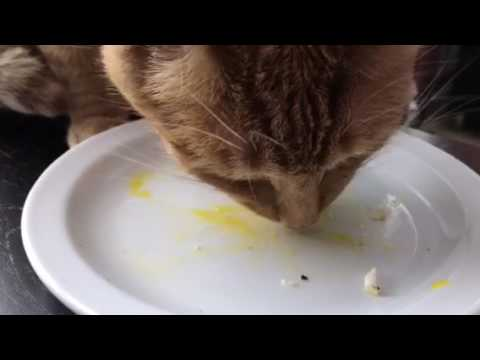 Buddy Loves Egg Yolks