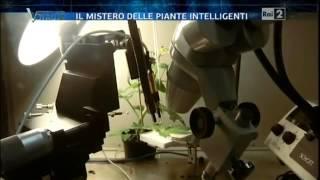 La vita misteriosa delle piante - Voyager PARTE 2