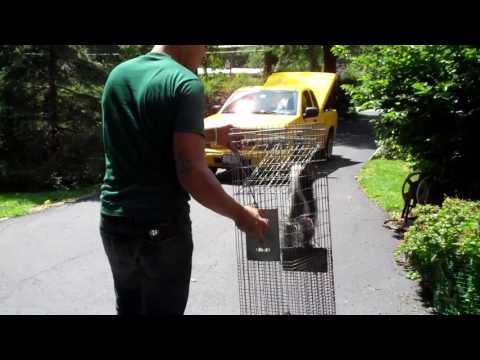 Animals Happen | Humane Naperville Wildlife Removal & Control